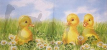 Serviette ducklings